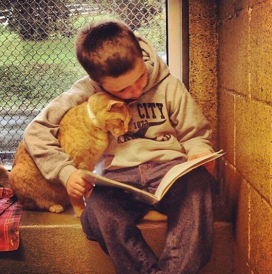 Berks Animal Rescue League in Berks County, PA has a program where kids come in 2 read to the kittehs at the shelter. http://t.co/qncWQWlT9G