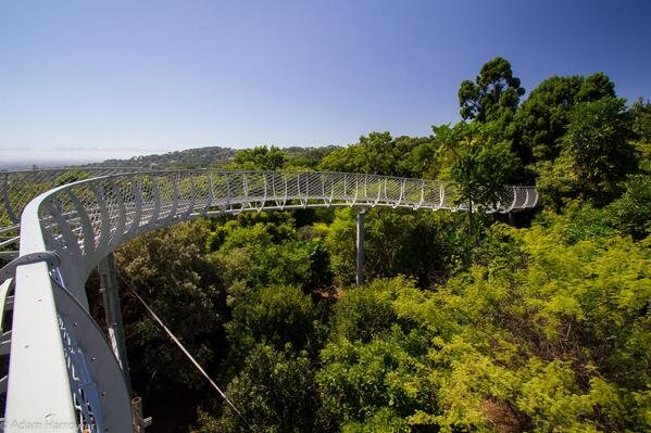 Gallery: The Treetop Walkway in Kirstenbosch Garden is almost finished. Check it out here > http://t.co/j9rQYDduPu http://t.co/dCtkaQtovg