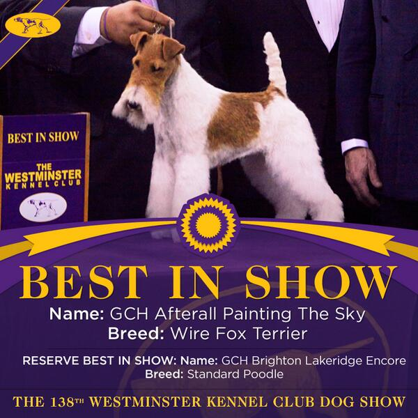 Sky the Wire Fox Terrier wins #Bestinshow at the 138th #WKCDogShow! http://t.co/7ApLg5vIyJ
