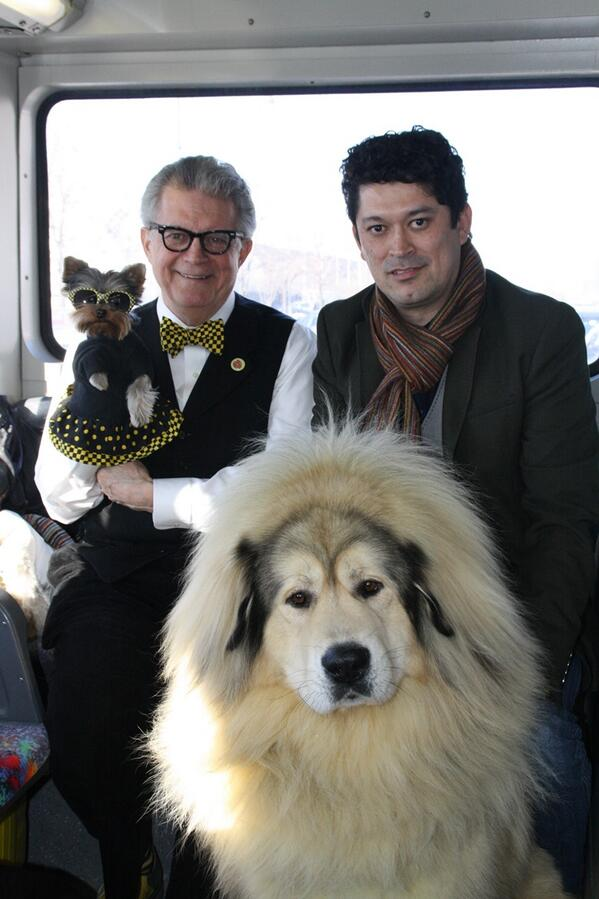 Rode the bus back to #WKCDogShow w/ Sasha the Tibetan Mastiff w/ human Ricardo! Hope he wins! Go Sasha! @WKCDOGS http://t.co/U9HmZgfUv9