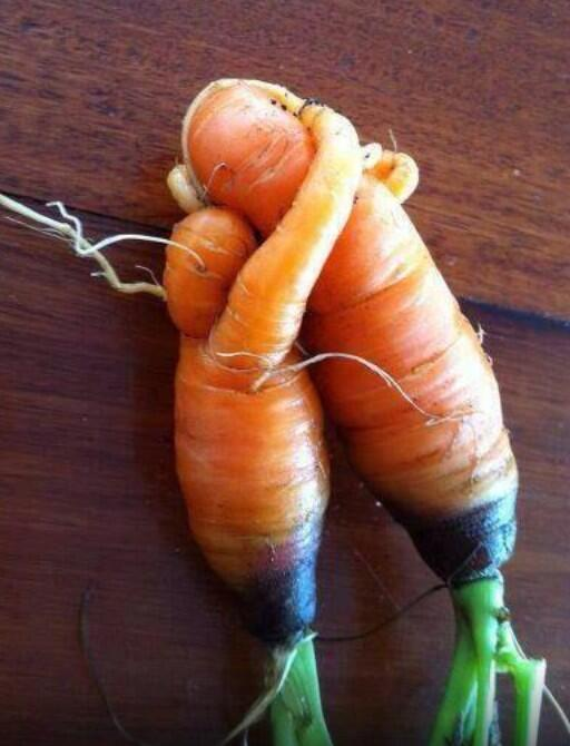 Just a couple of carrots having a cuddle... Happy Wednesday! http://t.co/OqDmTRUOtO