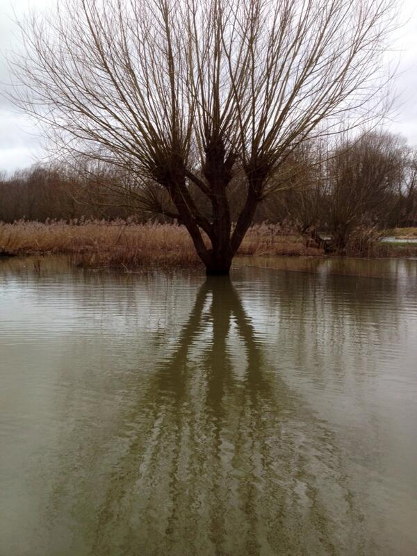 #Flood reflections SPF nature reserve. Wetland area provided inspiration today! http://t.co/gGlOMR82Xx
