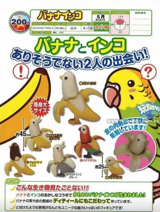 【バナナインコ!欲しい!!!(•ө•)/】  → http://t.co/2DDFLdINZC  #インコ #inko #バナナインコ http://t.co/yv9eoHjnti