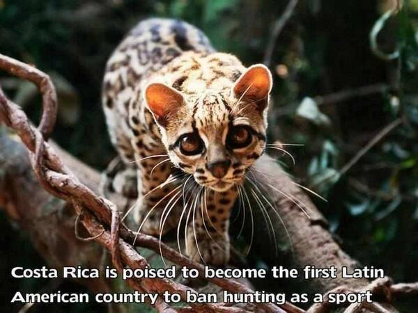 Costa Rica is another country that is catching on. http://t.co/CYI1n8jwUF