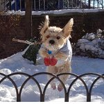 RT @KatieLobosco: The snow and slush has also created a run on doggie boots. http://t.co/r3uuwkHsQO @ParijaKavilanz http://t.co/x0uCVFW1x7