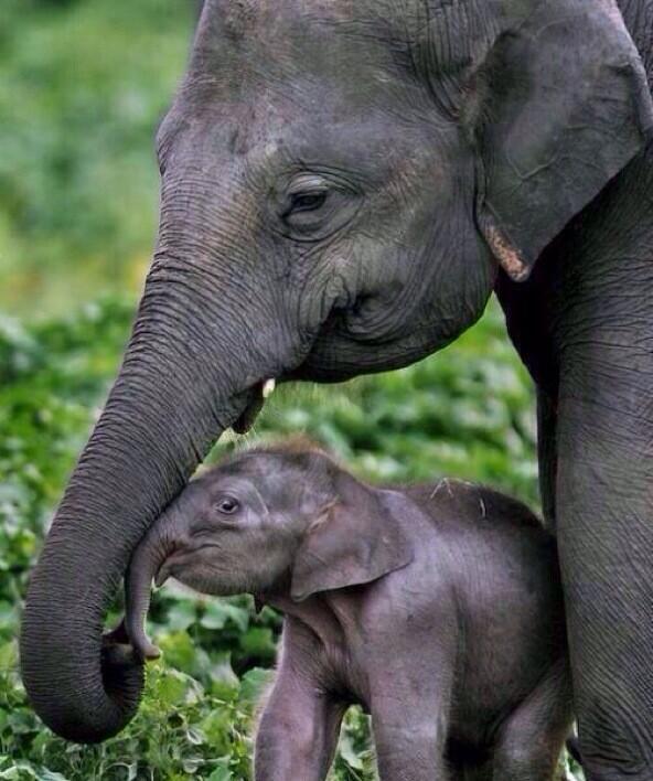 Baby elephant with mommy http://t.co/2Tz077XTNe