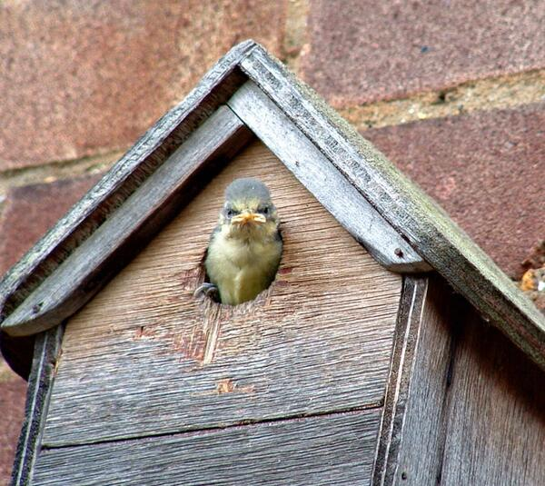 National #NestBoxWeek starts today! Birds need us, here's how you can help: http://t.co/DZaeTJEfTL http://t.co/pw2VCPmLrv