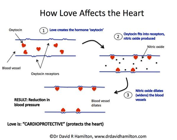 How love affects the heart. :-) http://t.co/XPreq8jo9F