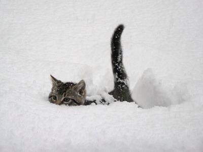 皆さんおはようございますo(^_-)O  雪いやだニャ〜(笑) 今日も宜しくお願い致します♪ http://t.co/9U0tyzD63V
