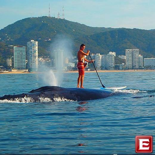 WOW! Pic taken Jan 20 in Acapulco Bay, Mexico. A huge whale played w/ paddlers for 2 hours! Photo: Mexico Mansion http://t.co/S3ICNWgIHN