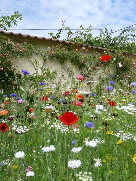 For early flowering with Gypsophila and Chamomile choose 'Passion' and enjoy Cosmos and Zinnia through to first frost http://t.co/xNuENQGv3x