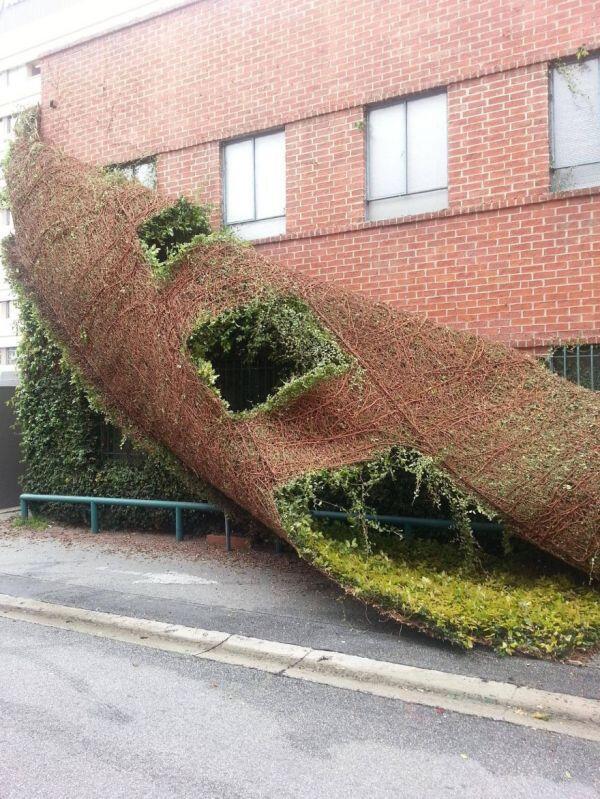 驚愕の真実。建物も脱皮する! http://t.co/yED4KWIU0y