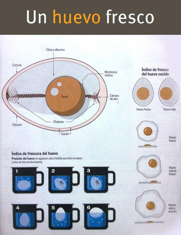 RT @Nimataniengorda: Una práctica infografía para conocer la frescura de los huevos que tenemos en casa: http://t.co/lQZVY7UlnV