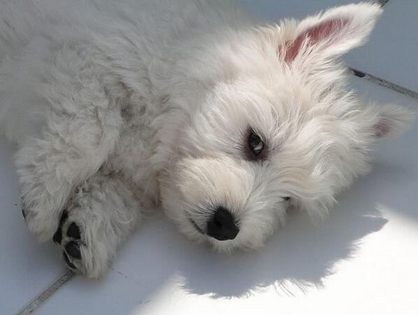 Cute! RT @SoDogGoneFunny: Loveable Pups: Can You Resist?  | #dogs #puppies #pets [4a017] http://t.co/eotJqxEAD1