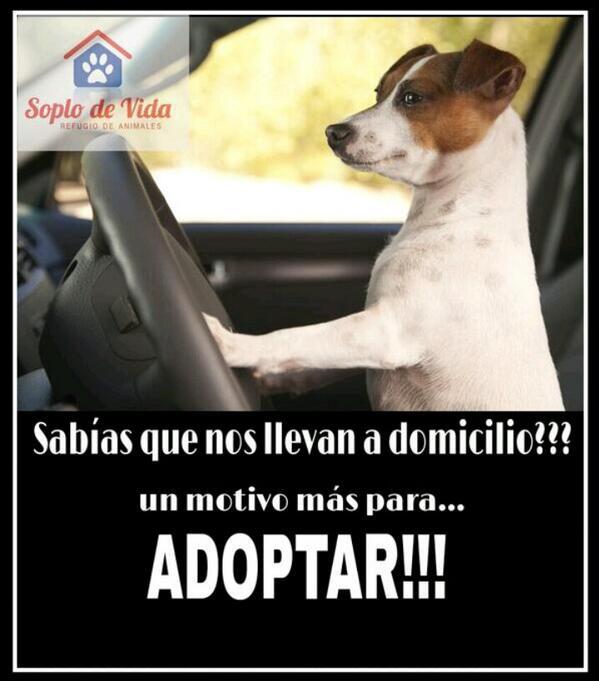 @geobarbarossa @micavazquez  un motivo mas para ADOPTAR!!!. Nos ayudan con un rt??? http://t.co/YbYEMIYVPS