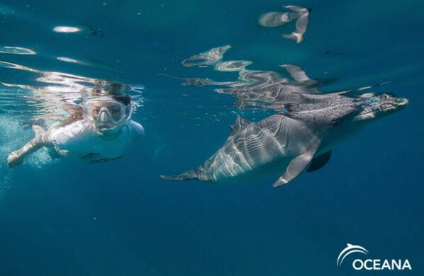 Watch our new PSA with @MirandaCosgrove from her #dolphins expedition! http://t.co/yzDaDHYie6 http://t.co/BsJsYBhzmk