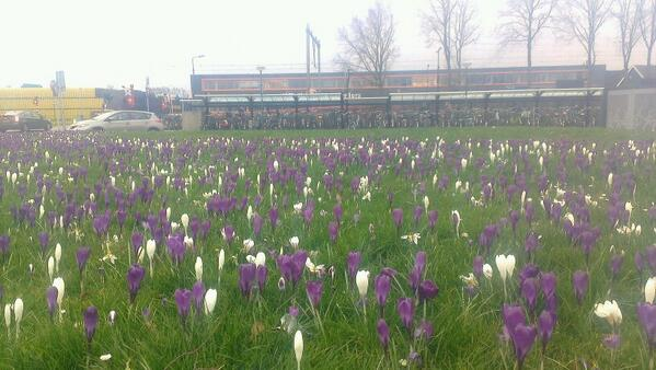 Thies van den Berg (@Thiesseman): Ook de bloemen bij station #bunnik kleuren liberaal @LiberalenBunnik #durftekiezen http://t.co/Nlzp1NOmz8