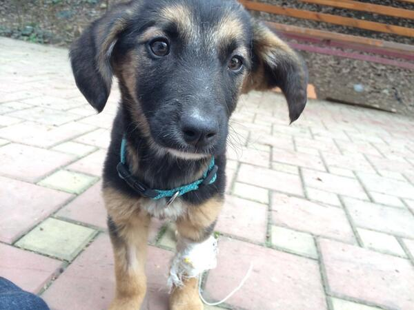 Still in Russia waiting 4 this girl to get better before I can fly home with all the dogs #sickasadog @HumaneSociety http://t.co/rHPykIawK5