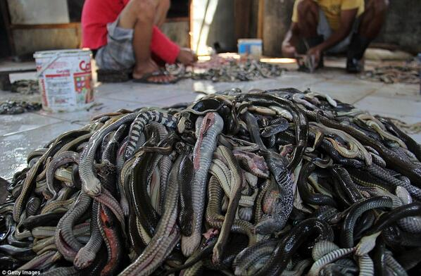The Indonesian slaughter house where snakes are killed to make designer wear | http://t.co/4JUHd1Nk5w http://t.co/B17svWLjZo