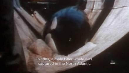 #EmptyTheTanksWorldwide http://t.co/XiQxK3YcCA so sad poor Tilli, dolphins & whales in captivity needs to end #BoycottSeaWorld