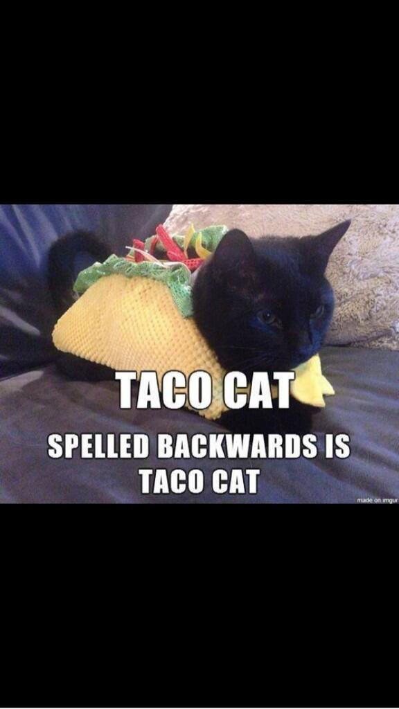 Taco Cat #palindrome http://t.co/rJ9oxi8zUs