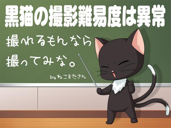 RT @itallinc: 10月23日(月)、#ねこの写真へたくそ選手権 ?…特に黒猫の写真ってうまく撮れる可能性が著しく低いよね!今日も一日なーいせんっ ( ^o^)Г☎チンッ #おはよう https://t.co/S0VY3raHKI