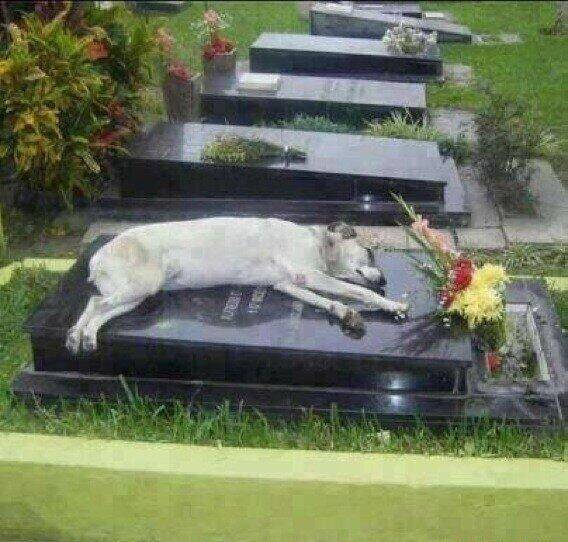 A Dog named Capitán sleeps next to the grave of his owner every night at 6pm. His owner, Miguel Guzmán died in 2006. http://t.co/l4VyC6eE4x
