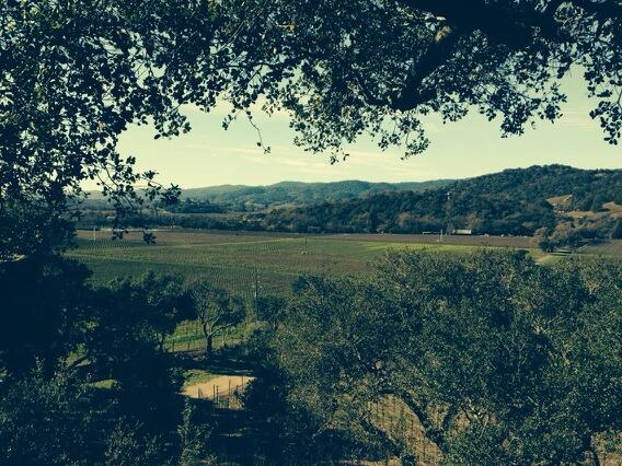 Another gorgeous #Napa morning. The view from a Stags Leap hillside. #California http://t.co/MJCg3lNXwI