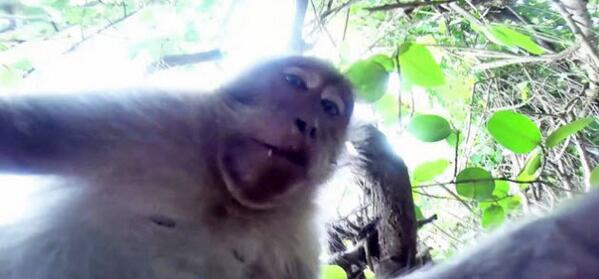 A monkey stole a GoPro camera, and used it to take a selfie.  http://t.co/mRJpFThsc2 http://t.co/jrRAQ0gtTW