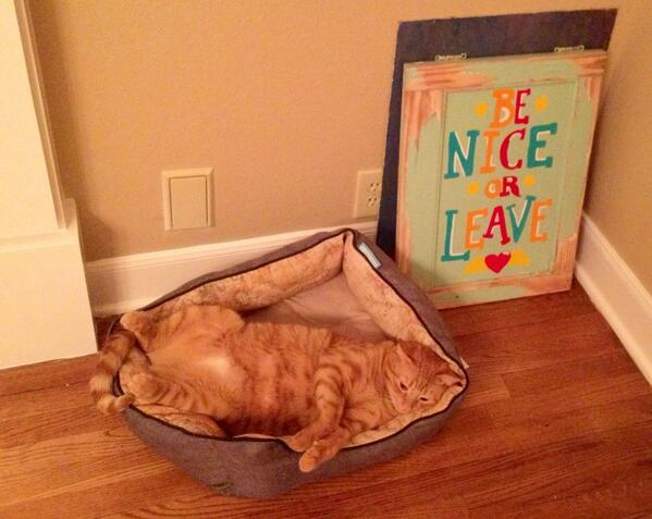 I think we're gonna need a bigger cat bed. http://t.co/Gwq9OjSoUe