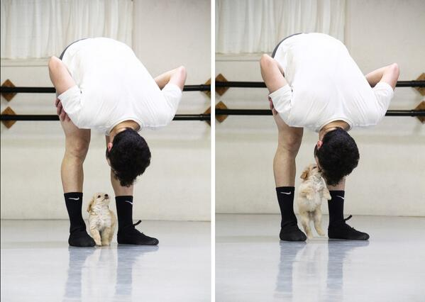 Ballet boys & puppies = does it get any better than this? http://t.co/AZOpB2lewZ