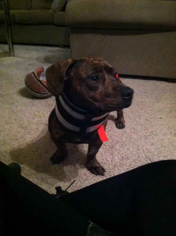 Wow. Gotta <3 that mix! RT @thisisabentley: @iLoveDogsInc Hi my name is Bentley. I am a #pitbull #dachshund mix. http://t.co/T4zI3mPLvk