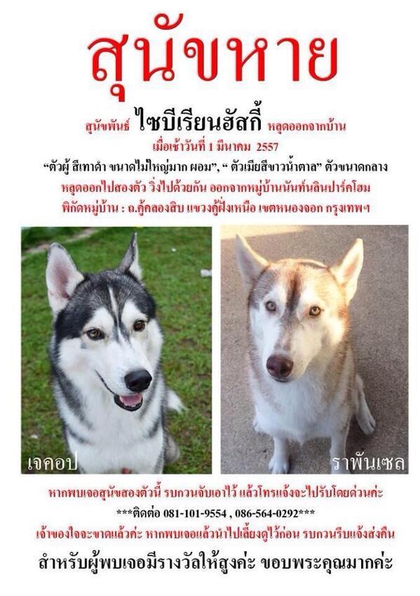 หากพบเจอสุนัขสองตัวในภาพหรือคล้ายสองตัวในภาพรบกวนแจ้ง 0811019554 มีเงินรางวัลตอบแทน10000บาท  https://t.co/x4QQ5Ses1B http://t.co/fMdR8lxeTo