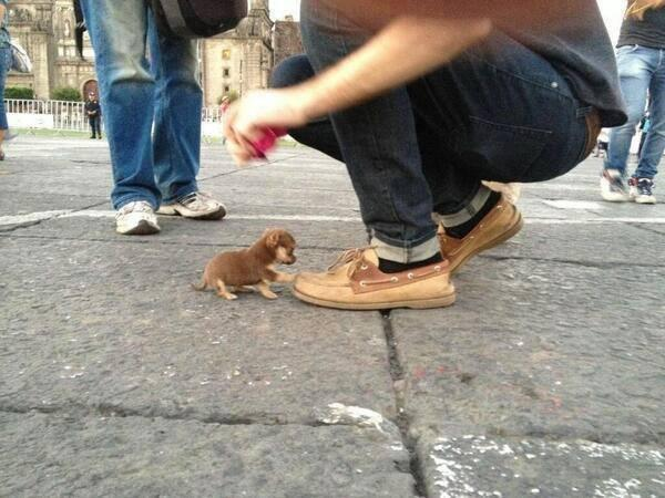 The world's smallest dog. http://t.co/VnIvgdEkg1