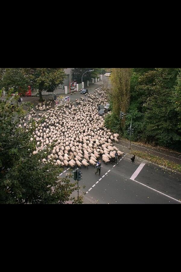 """""""@dtr1984: @TheFrankieMacca aberdeen fans on their way to parkhead http://t.co/QuoN00L99a""""  @DominikDiamond"""