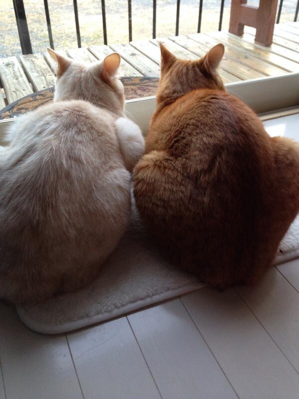 仲良く偵察中の午後でしたぁ〜♪ http://t.co/MiQxfGdvqH