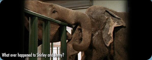 Touching story: two former circus elephants were reunited after a 22-year separation http://t.co/pJ8698lWG9 http://t.co/VqMSI6fedF