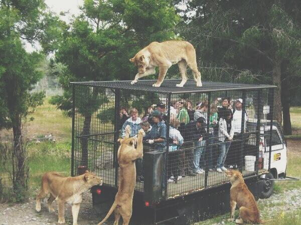 this is how zoos should be. http://t.co/JBulCmG7ZP