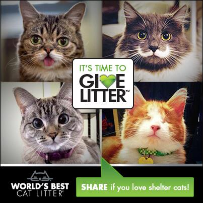 Help @IAMLILBUB @TheMustacheCat @AdorableNala #murdockthemarvelous #GiveLitter! Vote here: http://t.co/4acT7HGvPg http://t.co/3yZiSIEFV1