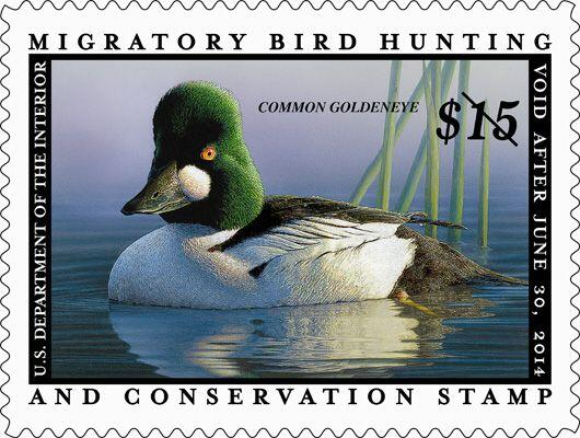 Help us celebrate 80 years of the federal #DuckStamp by using #80thduckstamp hashtag all day! http://t.co/Oy3e1VaGYo