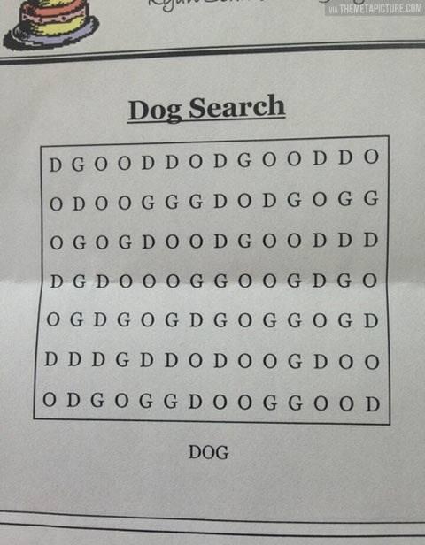 Missing Dog! Please help http://t.co/yRgaNu5Ttl