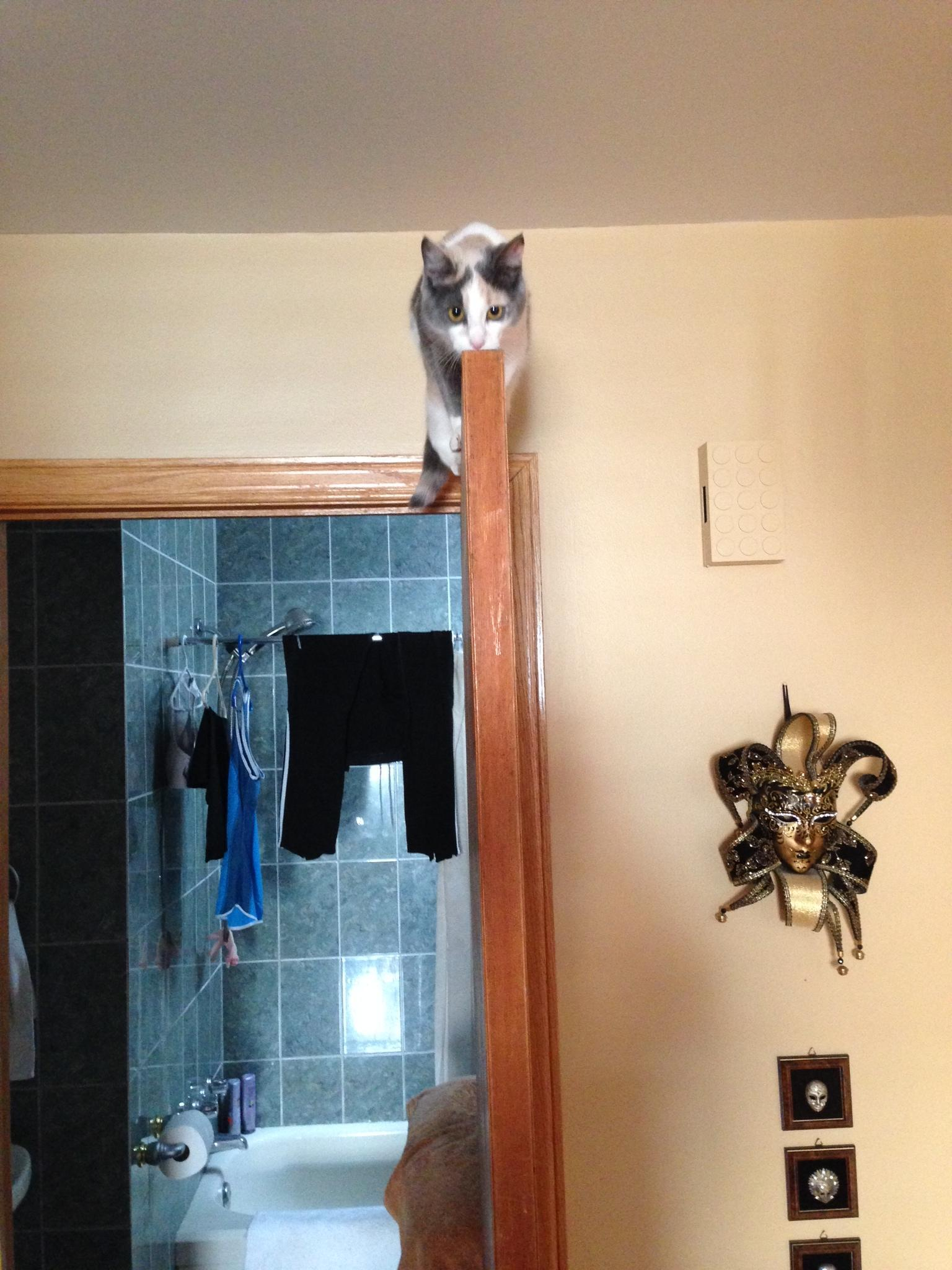 Ever get The Look from your cat? http://t.co/k1UUNwaFFB