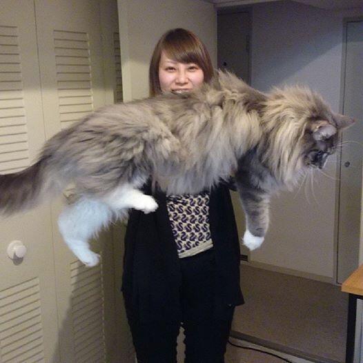 巨大猫(私のすっぴんも含め画像修正なし) http://t.co/kckEEciGuj