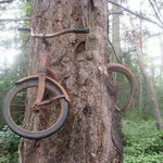 In 1914, a boy chained his bike to a tree to fight in the war. He never returned: http://t.co/5TW9Wmn9Ub