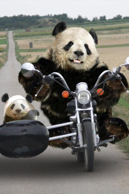 """@ucobudo: @Luna1177 @wstein  .ღ http://t.co/2TemfdMi95"" <--- this is me riding in style ;3"