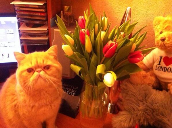 Мои поздравления красавицам девушкам с 8 марта !!! http://t.co/8bWFYYoG92