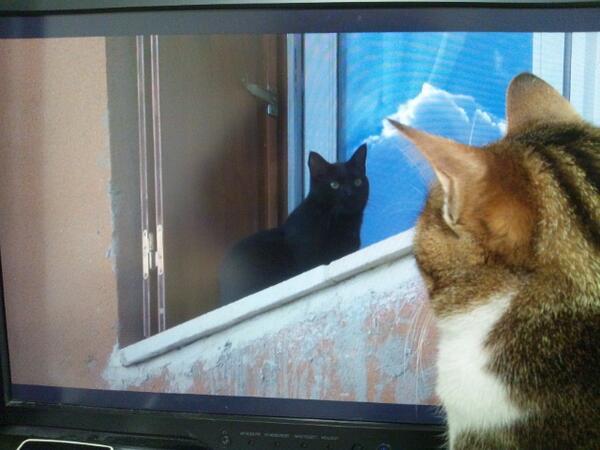 NHKの世界ネコ歩きを食い気味に試聴する猫。 http://t.co/H68u0Qz41w