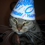 "RT @BirthdayFreebie: This ""Cat in the Hat"" idea is for the birds. #cats #birthdays http://t.co/Y2uamuHfTP"