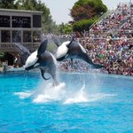 CA lawmaker proposes a law that would free SeaWorld's orcas http://t.co/PbvxjICpFg http://t.co/QgwjQgmUfi