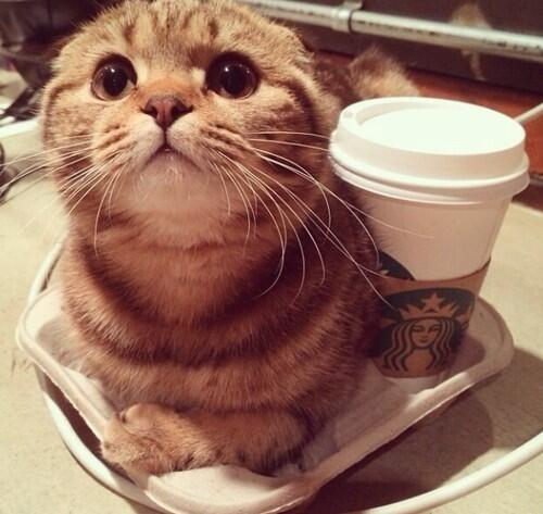 Tall meow-ca to go, please. And I'll need a carrier for that. #starbucks #tobeapartner http://t.co/BBsj8wHKUq
